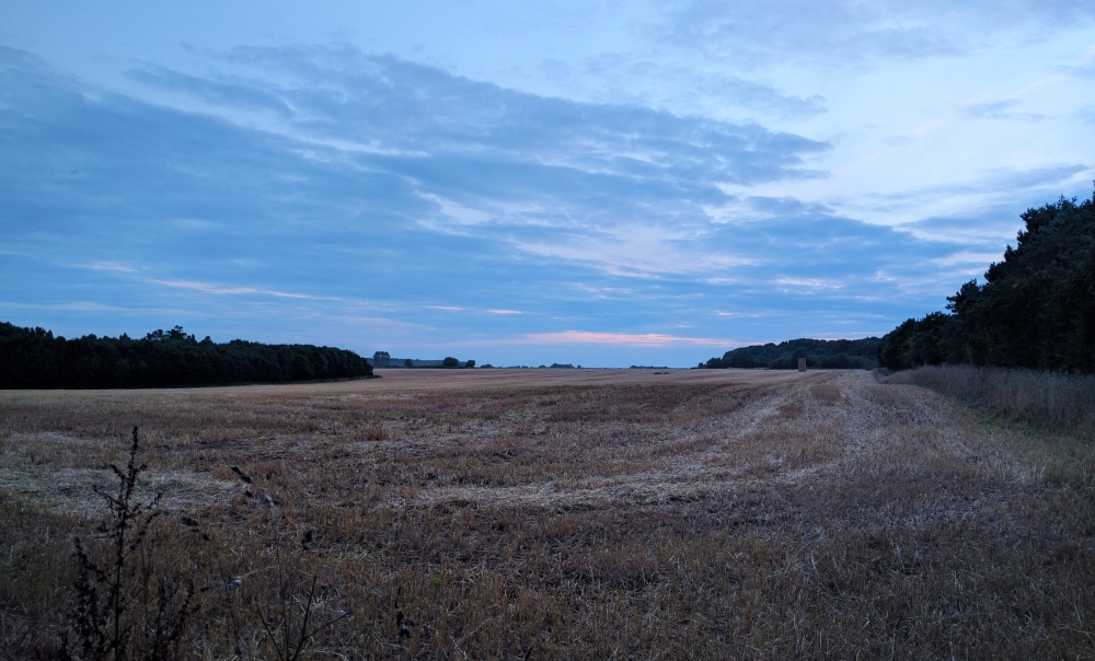 Wheat field and a dusky pink sky