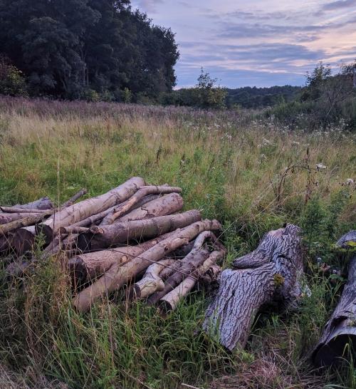 Freshly chopped logs
